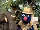 Sesame Street Grover and the Elephant Hollywoodedge, Bird Parrot VariousS PE021301-6