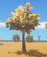 Маленькое деревце