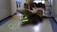 S1e4 alligator.png