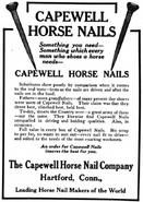 Capewellhorse4