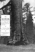 Kodak5