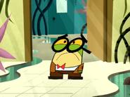 Little Endangered Pixiefrog