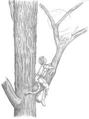 Aori-im-Baum.jpg