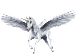 An-Beautiful-White-Winged-Unicorn-unicorns-39364232-1300-931.png