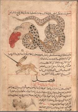 322px-Al-miraj and Serpent.png