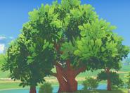 Oak Tree Full