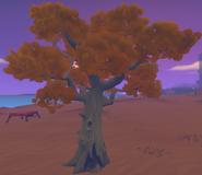 Poplar Tree Full