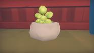 Succulent Plant Model