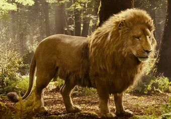 Lion The Chronicles Of Narnia Wiki Fandom Check out our narnia lion selection for the very best in unique or custom, handmade pieces from our shops. lion the chronicles of narnia wiki