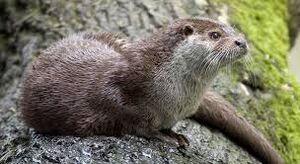 Otter.jpeg