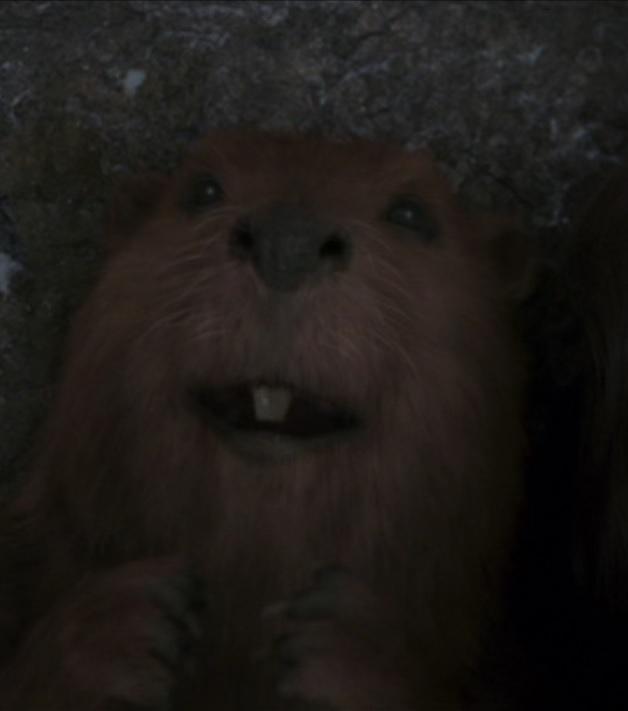 Mrs. Beaver