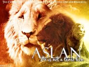 Aslan-aslan-18376541-800-600