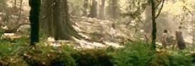 Shuddering Wood