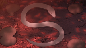 Arco de Desaparecimento de Mitsuki