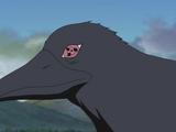 Corbeau d'Itachi