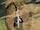 Bouclier de Sable