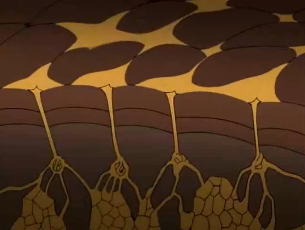 Oro Pegajoso de Araña