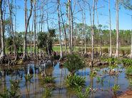 Southern Marshlands