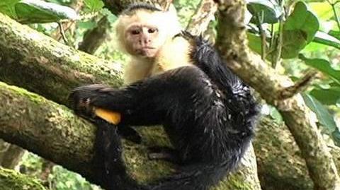 Funny Monkey Shower