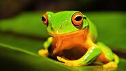 Orange-thighed-frog-animals-for 528708