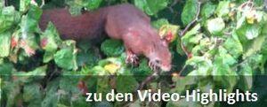 Video-Highlights.jpg