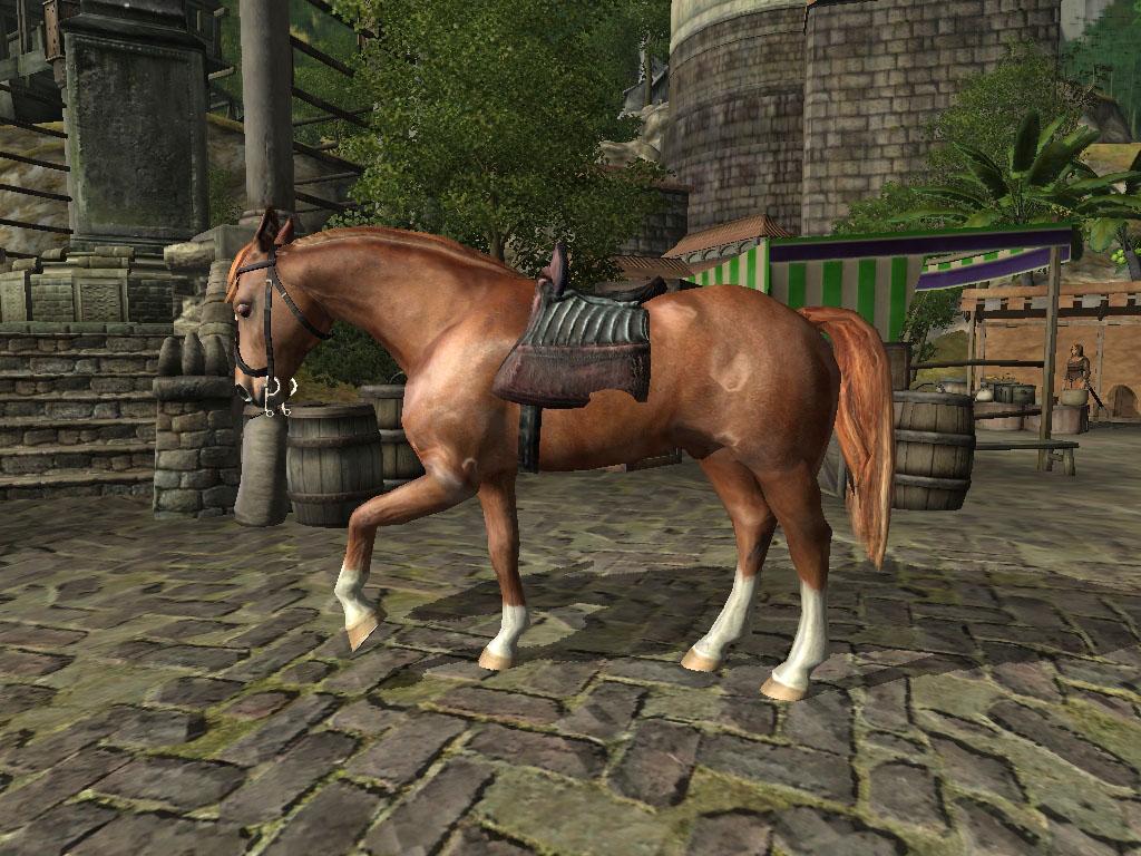 My Chestnut Horse