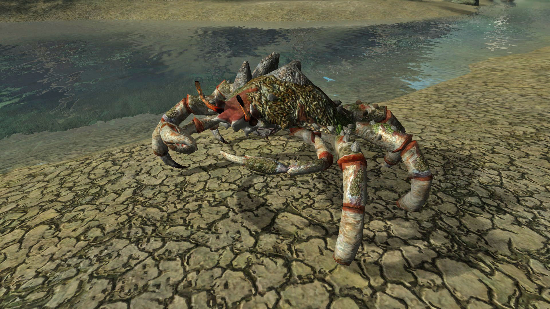 Armored River Crab