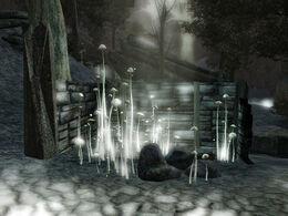 Dark Forest 05.jpg