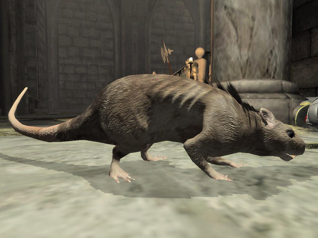 Adult Pit Rat