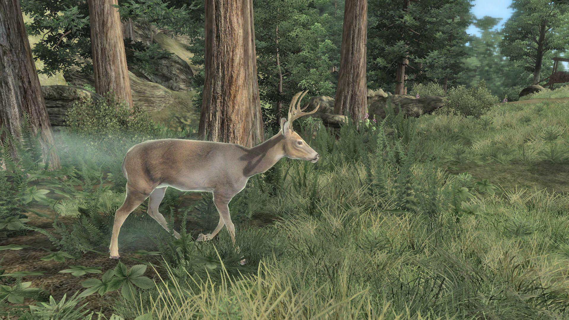 Diseased Deer