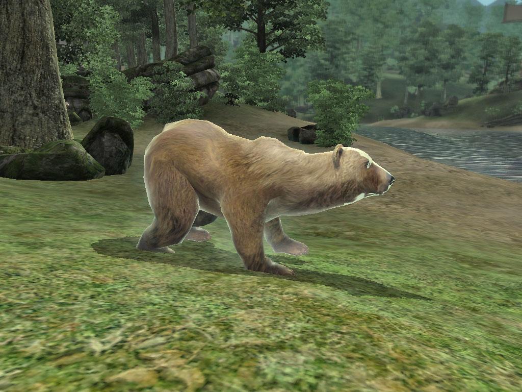 Diseased Brown Bear