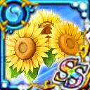 卡片資料/-522-許多向日葵