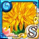 卡片資料/-194-黃色花朵