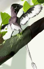 154px-Epidendrosauruswiki1.png