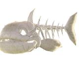 Bestiary/Re;Birth2/Fish Zombie