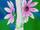 Flower Spirit L (Blanc) VII.png