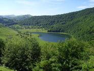 Crvanjsko in dense forest