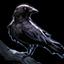 50px-Begleiter Vogelscheuche.png