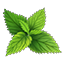 Crafting Resource Nettle.png
