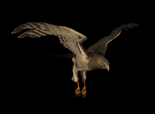 Hawk 2.png