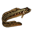 Icons Inventory Fishing Spottedeelpout.png