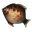 Event Winter Fish Brownbream.png
