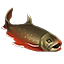 Icons Inventory Fishing Arcticchar.png