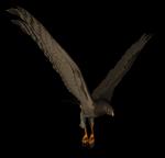 Hawk 3.png
