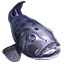 Icons Inventory Fishing Giantseabass.png