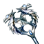 Icon Companion Dragonborncleric.png