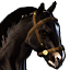 Icons Inventory Mount Horse Black.png