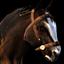 Amnian horse.png