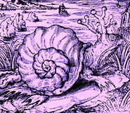 Sarmatian Sea monster snail, colour