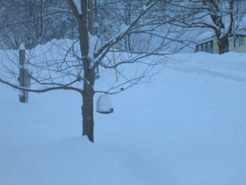Maine Snow.jpg